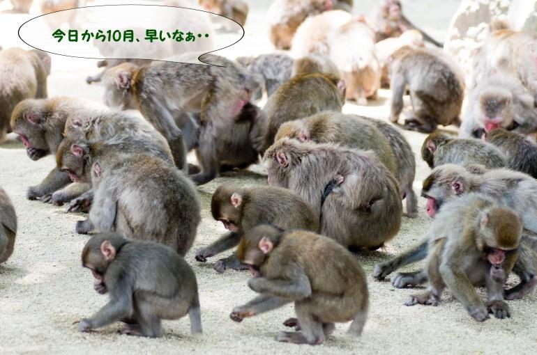 猿。10月①