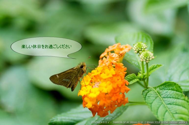 編集_10099774のコピー