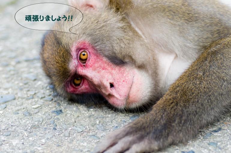 猿10月③