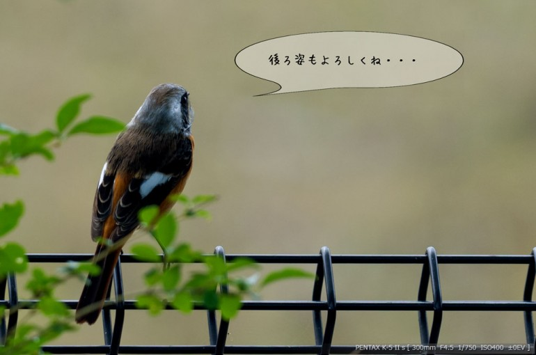 編集_10090027