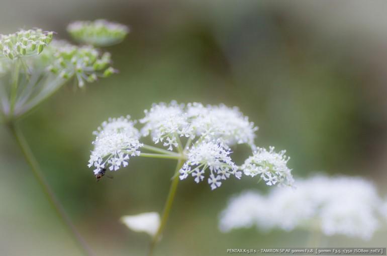 尾鈴山の植物