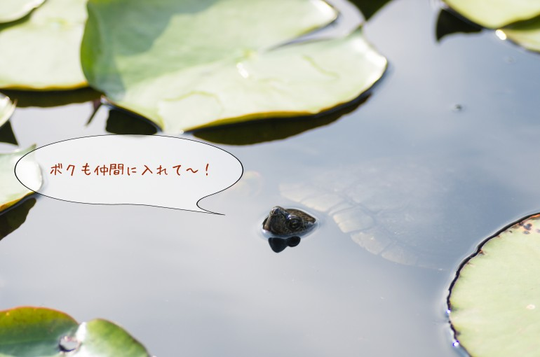 編集_10090347