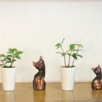 暑い時期は観葉植物で・・・